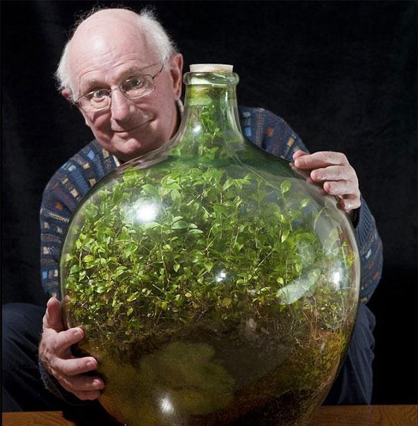 old-bottle-garden